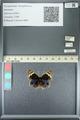 http://mczbase.mcz.harvard.edu/specimen_images/ent-lepidoptera/images/2013_05_22/IMG_143128.JPG