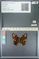http://mczbase.mcz.harvard.edu/specimen_images/ent-lepidoptera/images/2013_05_22/IMG_143130.JPG