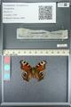 http://mczbase.mcz.harvard.edu/specimen_images/ent-lepidoptera/images/2013_05_22/IMG_143132.JPG