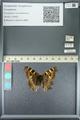 http://mczbase.mcz.harvard.edu/specimen_images/ent-lepidoptera/images/2013_05_22/IMG_143133.JPG