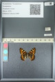 http://mczbase.mcz.harvard.edu/specimen_images/ent-lepidoptera/images/2013_05_22/IMG_143134.JPG