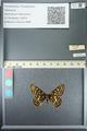 http://mczbase.mcz.harvard.edu/specimen_images/ent-lepidoptera/images/2013_05_24/IMG_143199.JPG