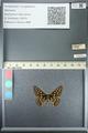 http://mczbase.mcz.harvard.edu/specimen_images/ent-lepidoptera/images/2013_05_24/IMG_143200.JPG