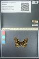 http://mczbase.mcz.harvard.edu/specimen_images/ent-lepidoptera/images/2013_05_24/IMG_143201.JPG