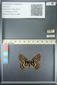 http://mczbase.mcz.harvard.edu/specimen_images/ent-lepidoptera/images/2013_05_24/IMG_143202.JPG