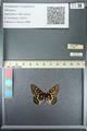 http://mczbase.mcz.harvard.edu/specimen_images/ent-lepidoptera/images/2013_05_24/IMG_143209.JPG