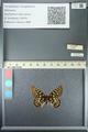 http://mczbase.mcz.harvard.edu/specimen_images/ent-lepidoptera/images/2013_05_24/IMG_143210.JPG
