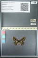 http://mczbase.mcz.harvard.edu/specimen_images/ent-lepidoptera/images/2013_05_24/IMG_143211.JPG