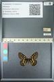 http://mczbase.mcz.harvard.edu/specimen_images/ent-lepidoptera/images/2013_05_24/IMG_143215.JPG