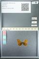 http://mczbase.mcz.harvard.edu/specimen_images/ent-lepidoptera/images/2013_05_24/IMG_143266.JPG