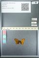 http://mczbase.mcz.harvard.edu/specimen_images/ent-lepidoptera/images/2013_05_24/IMG_143268.JPG