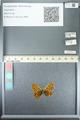 http://mczbase.mcz.harvard.edu/specimen_images/ent-lepidoptera/images/2013_05_24/IMG_143269.JPG