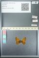 http://mczbase.mcz.harvard.edu/specimen_images/ent-lepidoptera/images/2013_05_24/IMG_143270.JPG