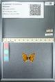 http://mczbase.mcz.harvard.edu/specimen_images/ent-lepidoptera/images/2013_05_24/IMG_143272.JPG
