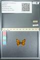 http://mczbase.mcz.harvard.edu/specimen_images/ent-lepidoptera/images/2013_05_24/IMG_143274.JPG