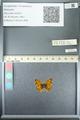 http://mczbase.mcz.harvard.edu/specimen_images/ent-lepidoptera/images/2013_05_24/IMG_143275.JPG
