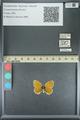 http://mczbase.mcz.harvard.edu/specimen_images/ent-lepidoptera/images/2013_07_02/IMG_143581.JPG