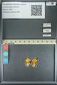 http://mczbase.mcz.harvard.edu/specimen_images/ent-lepidoptera/images/2013_07_02/IMG_143582.JPG