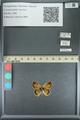 http://mczbase.mcz.harvard.edu/specimen_images/ent-lepidoptera/images/2013_07_02/IMG_143583.JPG