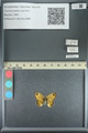 http://mczbase.mcz.harvard.edu/specimen_images/ent-lepidoptera/images/2013_07_02/IMG_143584.JPG