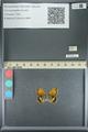 http://mczbase.mcz.harvard.edu/specimen_images/ent-lepidoptera/images/2013_07_02/IMG_143585.JPG