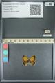 http://mczbase.mcz.harvard.edu/specimen_images/ent-lepidoptera/images/2013_07_02/IMG_143587.JPG