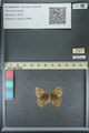 http://mczbase.mcz.harvard.edu/specimen_images/ent-lepidoptera/images/2013_07_02/IMG_143641.JPG