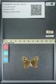 http://mczbase.mcz.harvard.edu/specimen_images/ent-lepidoptera/images/2013_07_02/IMG_143642.JPG