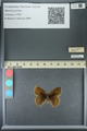http://mczbase.mcz.harvard.edu/specimen_images/ent-lepidoptera/images/2013_07_02/IMG_143643.JPG