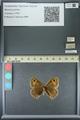 http://mczbase.mcz.harvard.edu/specimen_images/ent-lepidoptera/images/2013_07_02/IMG_143644.JPG