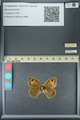 http://mczbase.mcz.harvard.edu/specimen_images/ent-lepidoptera/images/2013_07_02/IMG_143646.JPG