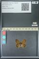 http://mczbase.mcz.harvard.edu/specimen_images/ent-lepidoptera/images/2013_07_02/IMG_143647.JPG