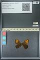 http://mczbase.mcz.harvard.edu/specimen_images/ent-lepidoptera/images/2013_07_02/IMG_143648.JPG