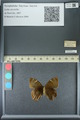 http://mczbase.mcz.harvard.edu/specimen_images/ent-lepidoptera/images/2013_07_02/IMG_143649.JPG