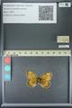 http://mczbase.mcz.harvard.edu/specimen_images/ent-lepidoptera/images/2013_07_02/IMG_143650.JPG
