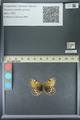 http://mczbase.mcz.harvard.edu/specimen_images/ent-lepidoptera/images/2013_07_02/IMG_143651.JPG