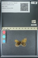 http://mczbase.mcz.harvard.edu/specimen_images/ent-lepidoptera/images/2013_07_02/IMG_143652.JPG