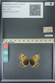 http://mczbase.mcz.harvard.edu/specimen_images/ent-lepidoptera/images/2013_07_02/IMG_143653.JPG