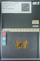 http://mczbase.mcz.harvard.edu/specimen_images/ent-lepidoptera/images/2013_07_02/IMG_143655.JPG