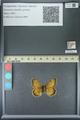 http://mczbase.mcz.harvard.edu/specimen_images/ent-lepidoptera/images/2013_07_02/IMG_143656.JPG