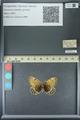 http://mczbase.mcz.harvard.edu/specimen_images/ent-lepidoptera/images/2013_07_02/IMG_143657.JPG