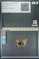 http://mczbase.mcz.harvard.edu/specimen_images/ent-lepidoptera/images/2013_07_02/IMG_143660.JPG