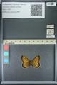 http://mczbase.mcz.harvard.edu/specimen_images/ent-lepidoptera/images/2013_07_02/IMG_143661.JPG