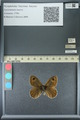 http://mczbase.mcz.harvard.edu/specimen_images/ent-lepidoptera/images/2013_07_02/IMG_143663.JPG