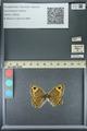 http://mczbase.mcz.harvard.edu/specimen_images/ent-lepidoptera/images/2013_07_02/IMG_143666.JPG