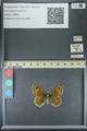 http://mczbase.mcz.harvard.edu/specimen_images/ent-lepidoptera/images/2013_07_02/IMG_143667.JPG