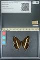 http://mczbase.mcz.harvard.edu/specimen_images/ent-lepidoptera/images/2013_07_02/IMG_143669.JPG