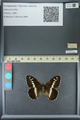 http://mczbase.mcz.harvard.edu/specimen_images/ent-lepidoptera/images/2013_07_02/IMG_143670.JPG