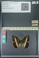 http://mczbase.mcz.harvard.edu/specimen_images/ent-lepidoptera/images/2013_07_02/IMG_143672.JPG
