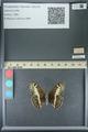 http://mczbase.mcz.harvard.edu/specimen_images/ent-lepidoptera/images/2013_07_02/IMG_143673.JPG